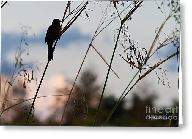 Watchful Bird At Green Cay Greeting Card