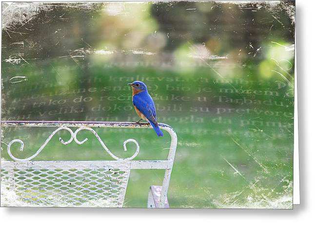 Watchful Bird Greeting Card by Linda Segerson