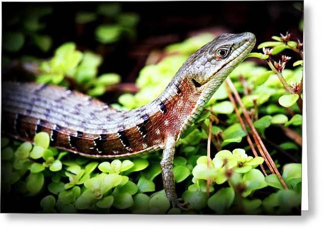 Watchful Eye Greeting Card by Melanie Lankford Photography