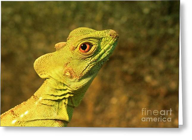 Watchful Eye Of The Green Basilisk Lizard  Greeting Card by Inspired Nature Photography Fine Art Photography
