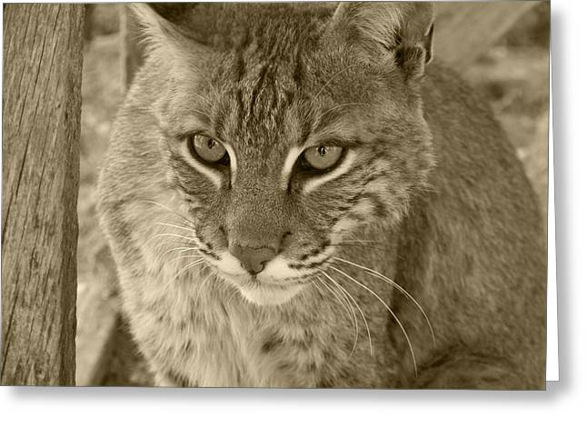 Watchful Eyes-sepia Greeting Card by Jennifer  King
