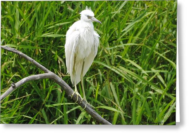 Watchful Heron Greeting Card