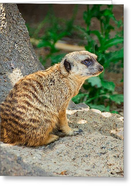 Watchful Meerkat Vertical Greeting Card by Jon Woodhams