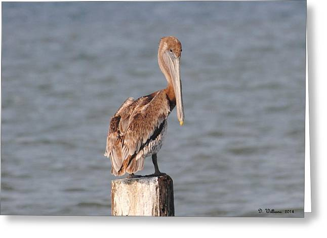 Watchful Pelican Greeting Card