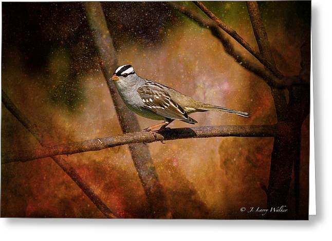 Watchful White-crowned Sparrow Greeting Card by J Larry Walker