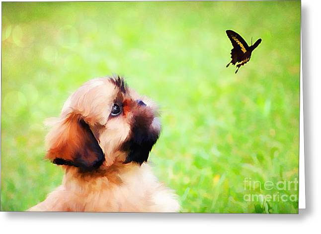 Watching Butterflies Greeting Card by Darren Fisher