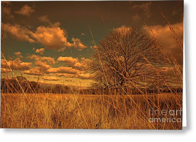 Watching From The Tall Grass Greeting Card by Jasna Buncic