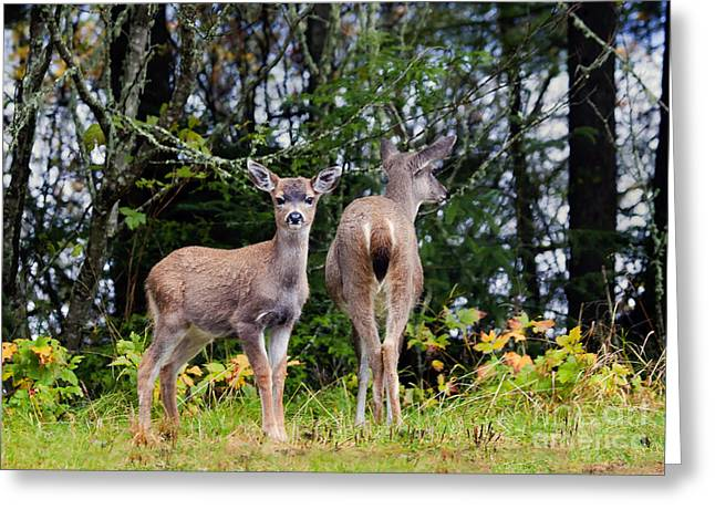 Watching Out For Mom Greeting Card by Mike  Dawson