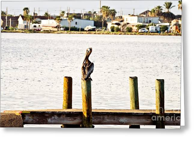 Watching Over The Bay Greeting Card by Scott Pellegrin