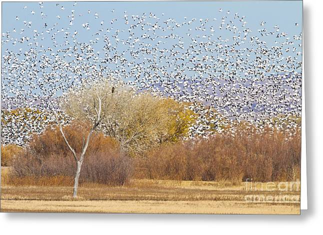 Greeting Card featuring the photograph Watching Over The Flock by Bryan Keil