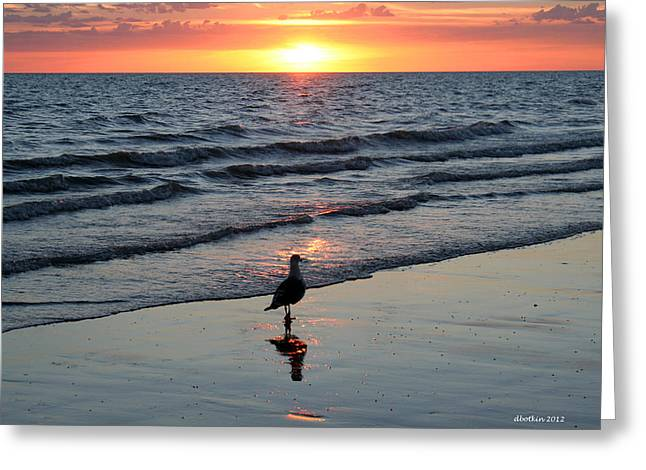 Watching The Sun Rise Greeting Card