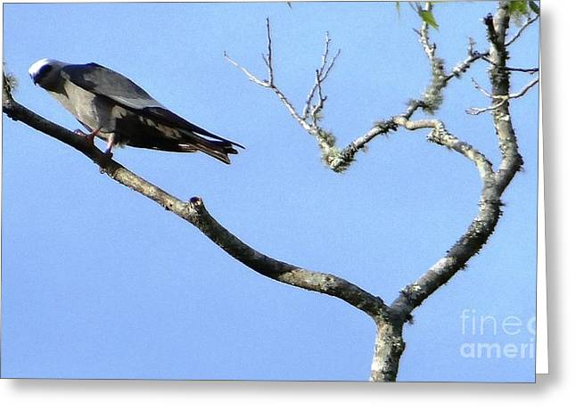 Greeting Card featuring the photograph Watching You Like A Hawk by Ecinja Art Works