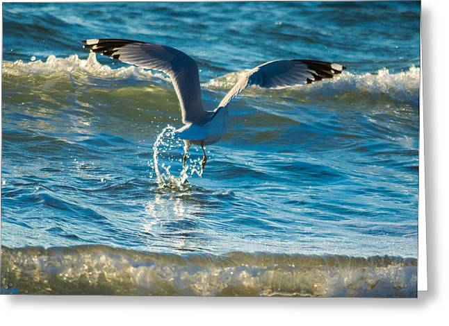 Water Dance  Greeting Card