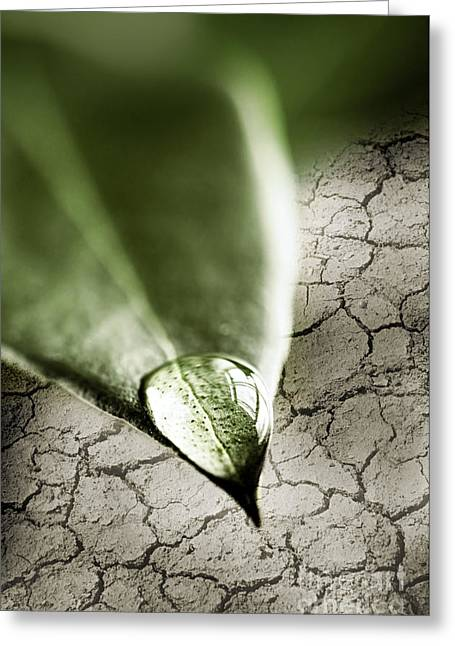 Water Drop On Green Leaf Greeting Card