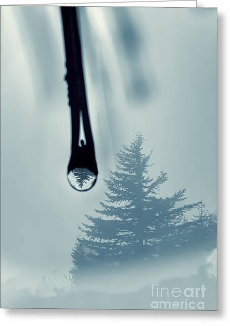 Water Drop With Tree Reflection Greeting Card by Dan Friend