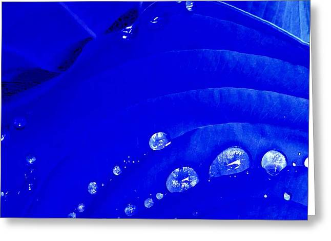 Water Droplets  Greeting Card by Carolyn Repka