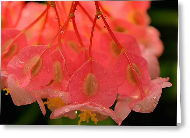 Water Droplets I Greeting Card by Kathi Isserman