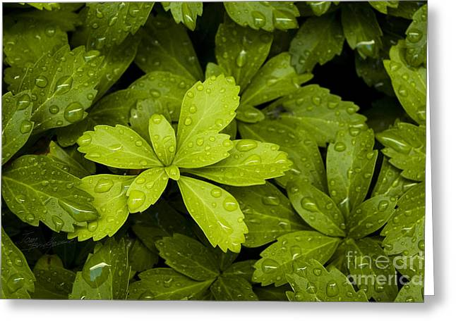 Water Drops New Growth Greeting Card