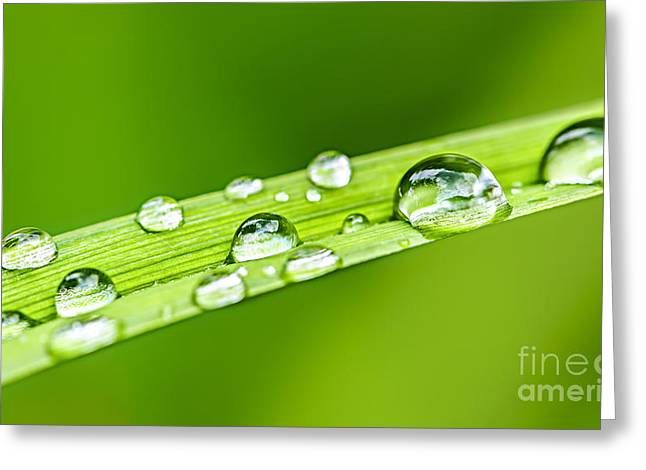 Water Drops On Grass Blade Greeting Card by Elena Elisseeva