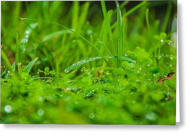Water Drops On The  Grass 0084 Greeting Card by Terrence Downing