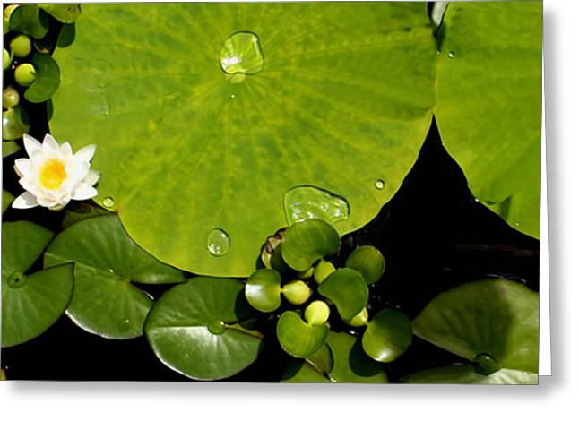 Water Drops Bristol Rhode Island Greeting Card by Tom Prendergast