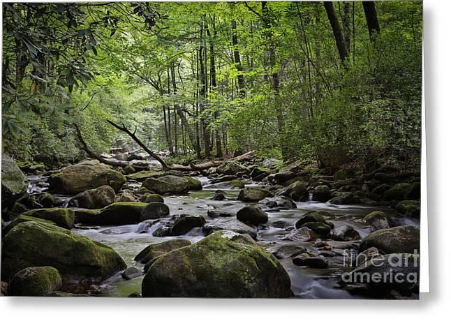 Water Falls Woods Greeting Card by Mina Isaac
