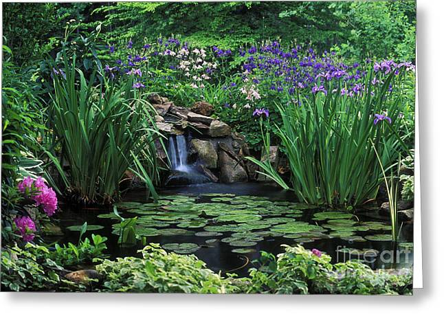 Water Feature - Fs000150 Greeting Card