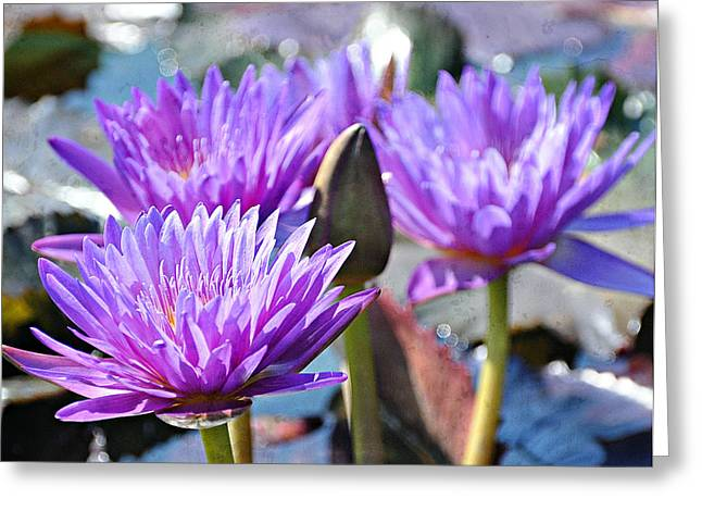 Greeting Card featuring the photograph Water Flower 1006 by Marty Koch