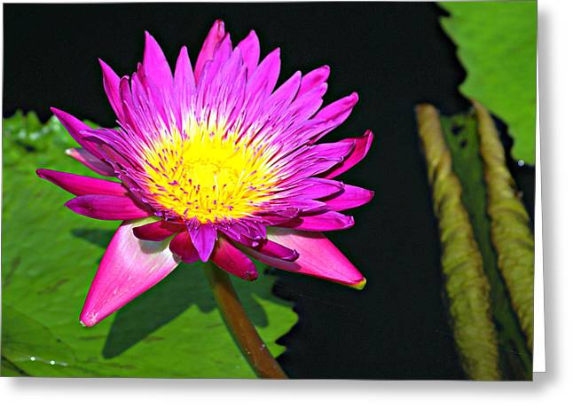 Greeting Card featuring the photograph Water Flower 10089 by Marty Koch