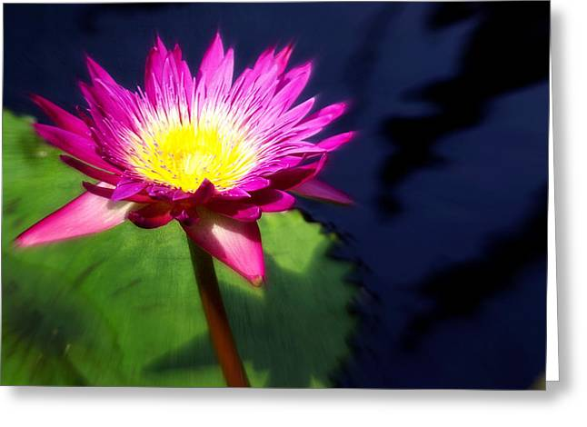 Water Flower Greeting Card by Marty Koch