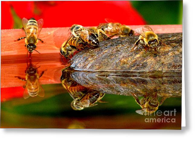 Water For Honey Bees 2 Greeting Card