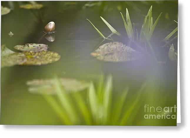 Water Garden Greeting Card by Heiko Koehrer-Wagner