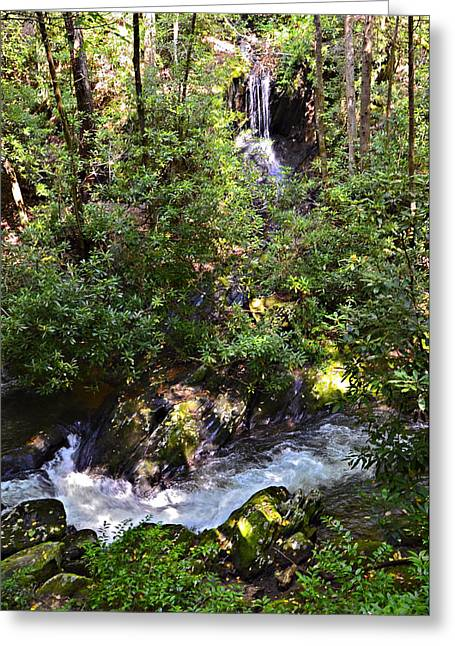 Water In The Forest Greeting Card by Susan Leggett