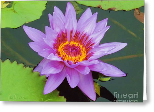 Water Lilies 005 Greeting Card