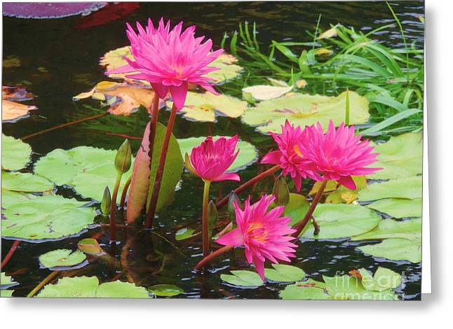 Water Lilies 008 Greeting Card