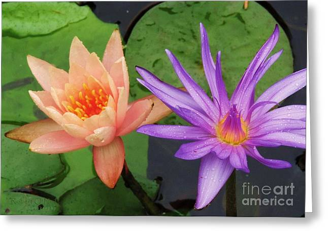 Water Lilies 011 Greeting Card
