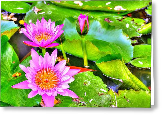 Water Lilies 2 Greeting Card