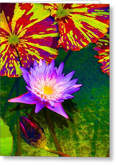 Water Lilies Greeting Card by Amy Vangsgard
