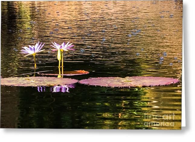 Water Lilies And Bubbles Greeting Card by Zina Stromberg