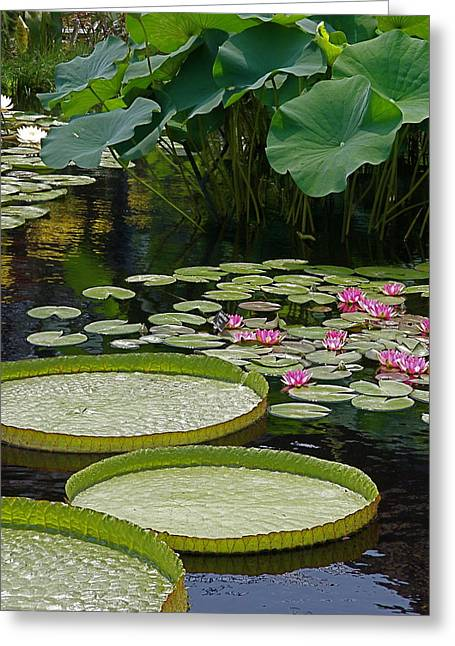 Greeting Card featuring the photograph Water Lilies And Platters And Lotus Leaves by Byron Varvarigos