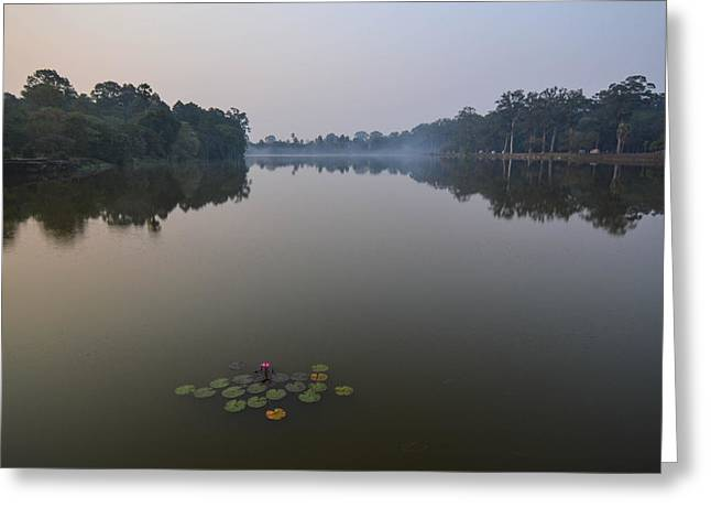 Water Lilies At Dawn Greeting Card by Bill Mock