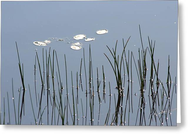 Water Lilies Greeting Card by Carolyn Reinhart