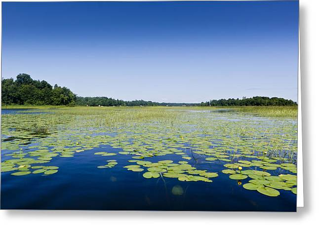 Water Lilies Greeting Card by Gary Eason