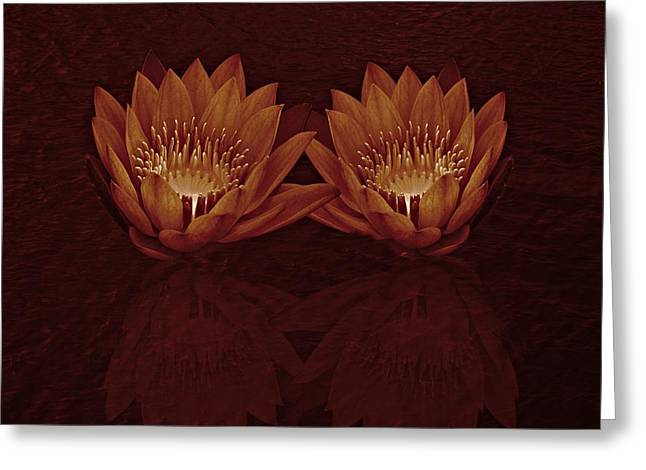 Water Lilies In Deep Sepia Greeting Card