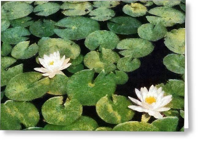 Water Lilies Greeting Card by Michelle Calkins