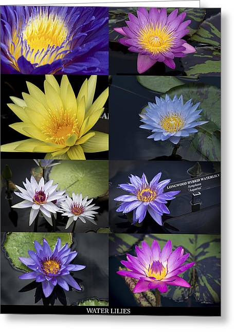 Water Lilies Greeting Card by Phil Abrams