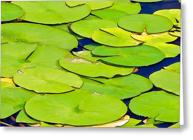 Water Lilly Greeting Card by David Letts