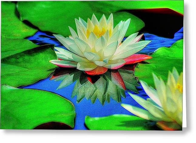 Water Lilly Greeting Card by Ed Roberts