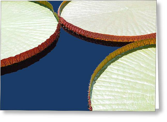 Water Lilly Platters Greeting Card