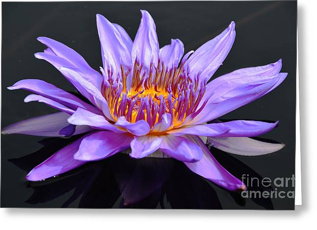 Water Lily - Aquarius Greeting Card